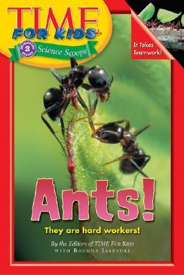 Ants!: Time for Kids science scoop level 2