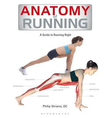 Anatomy of Running : A Guide to Running Right