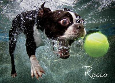 Underwater Dogs: Rocco Puzzle