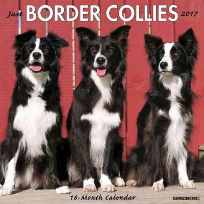 Just Border Collies