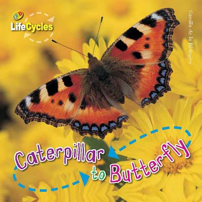 Caterpillar to Butterfly : Camilla de La Bedoyere ...