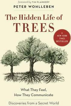 The Hidden Life of Trees (Hardback)
