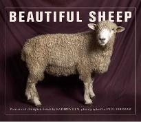 Beautiful Sheep