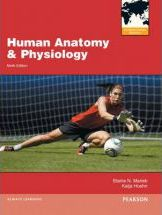 Human Anatomy and Physiology, Plus MasteringA&P with Pearson Etext