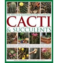 Practical Illustrated Guide to Growing Cacti & Succulents